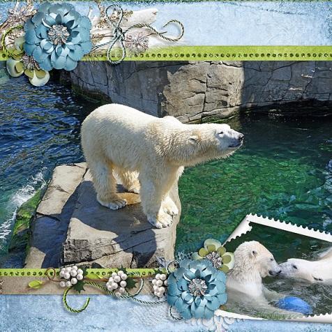 polarbears