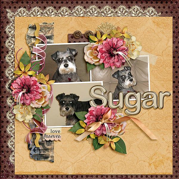 Sugar-Love-Forever-020818